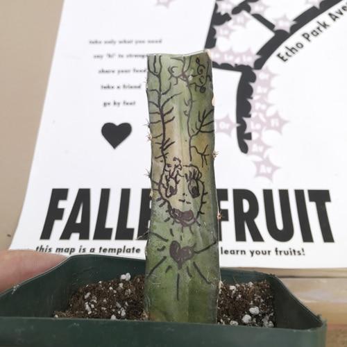 img_0749-fallen-fruit-500-px